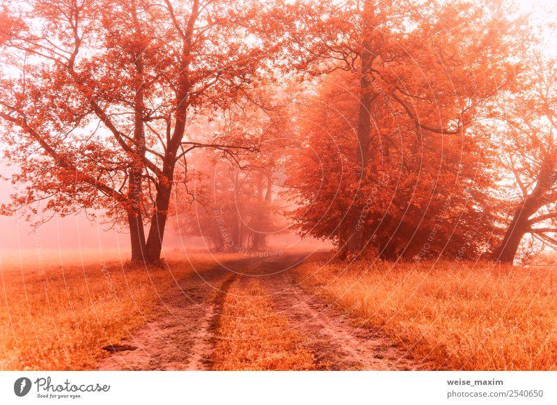 Herbstlicher nebliger Feldweg. Bunter Nebelfall am ländlichen Morgen schön Umwelt Natur Landschaft Erde Sonnenaufgang Sonnenuntergang Schönes Wetter Baum Gras