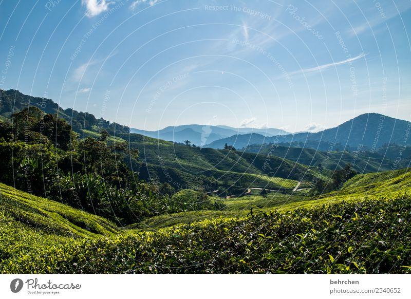 wie wär es... Ferien & Urlaub & Reisen Natur Pflanze grün Landschaft Baum Blatt Ferne Berge u. Gebirge Tourismus außergewöhnlich Freiheit Ausflug Feld Abenteuer