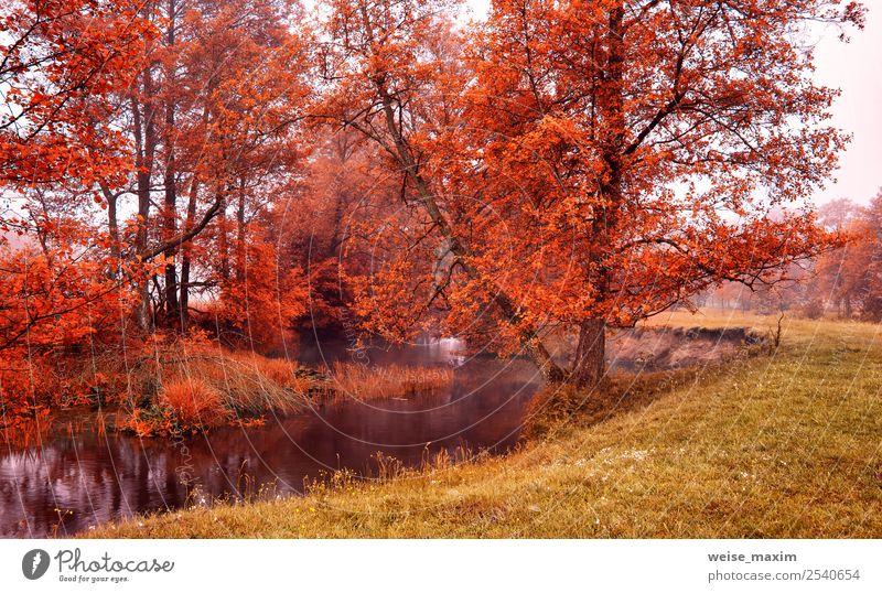 Himmel Natur blau schön Farbe grün Wasser Landschaft Baum rot Blatt Wald gelb Herbst natürlich Wiese