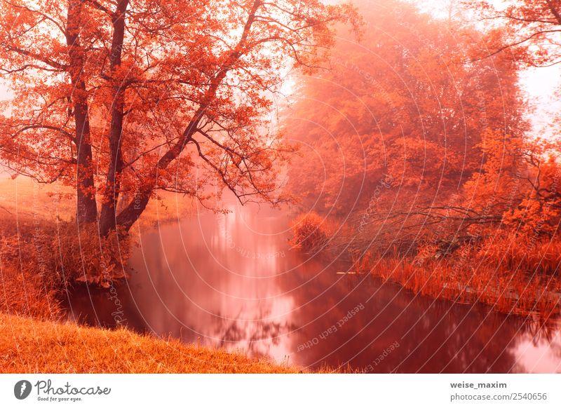 Herbstfarben auf dem herbstlichen, nebligen Fluss. Aldenbäume schön Natur Landschaft Pflanze Urelemente Sand Luft Wasser Wassertropfen Sonnenaufgang