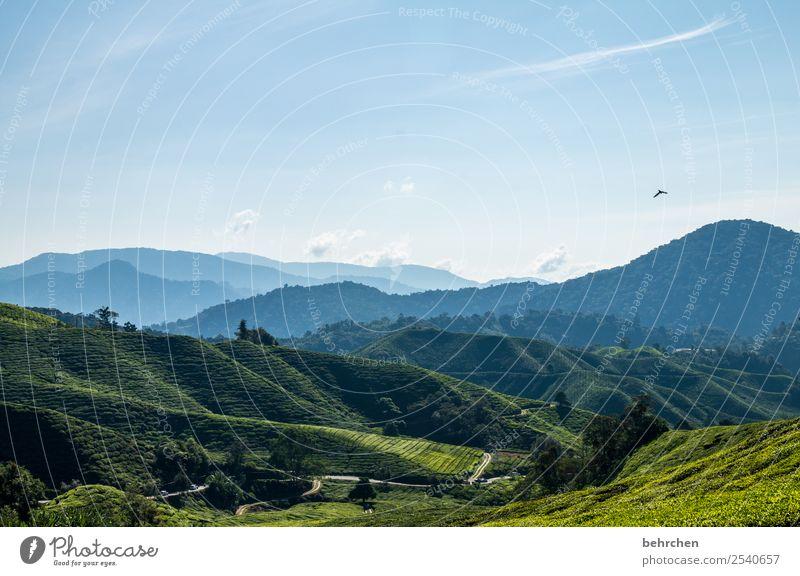 einer flog über das... Himmel Natur Ferien & Urlaub & Reisen Pflanze schön grün Landschaft Baum Ferne Berge u. Gebirge Tourismus Freiheit außergewöhnlich Vogel