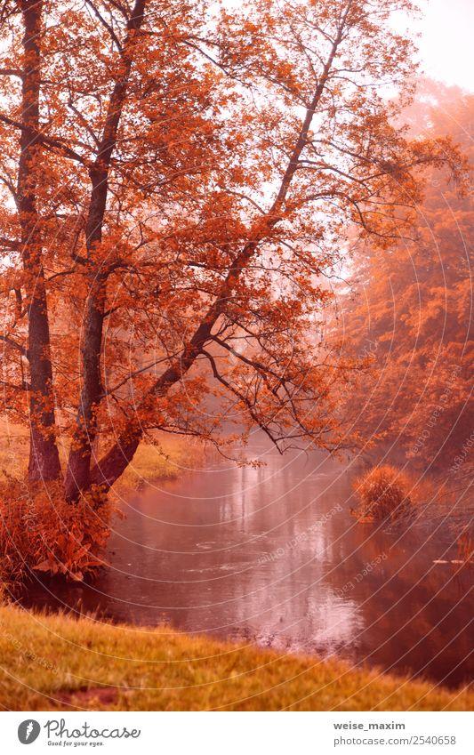 Herbstdämmerungsszene. Aldenbäume am nebligen Flussufer schön Ferien & Urlaub & Reisen Tourismus Ausflug Freiheit Expedition Umwelt Natur Landschaft Pflanze