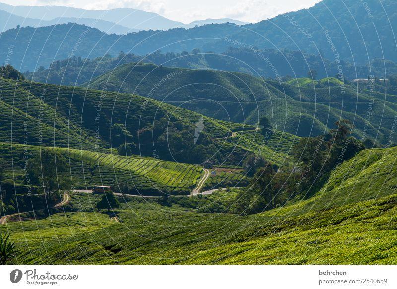 ein weg durchs grün Ferien & Urlaub & Reisen Natur Pflanze Landschaft Baum Blatt Ferne Berge u. Gebirge Straße Tourismus außergewöhnlich Freiheit Ausflug Feld
