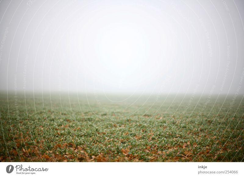 Die Stille spürt man erst, wenn man mittendrin ist. Erde Luft Himmel Horizont Herbst schlechtes Wetter Nebel Gras Wiese Feld dunkel Ferne Unendlichkeit gruselig