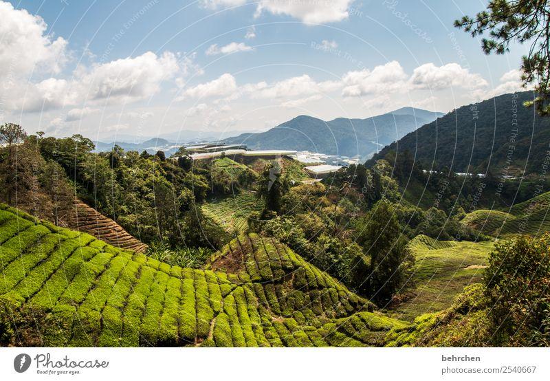 tee fürs wochenende Himmel Ferien & Urlaub & Reisen Natur Pflanze grün Landschaft Baum Wolken Blatt Ferne Berge u. Gebirge Umwelt Tourismus außergewöhnlich