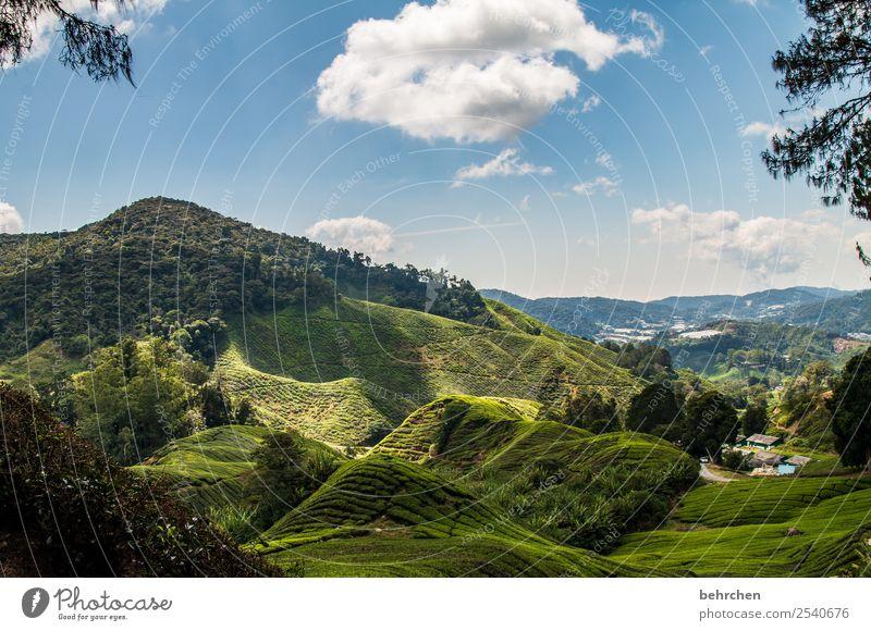 schneewittchen Himmel Ferien & Urlaub & Reisen Natur grün Landschaft Baum Wolken Ferne Berge u. Gebirge Tourismus außergewöhnlich Freiheit Ausflug Feld