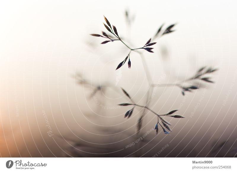 Gras Natur schön Pflanze gelb Herbst Wiese Umwelt Landschaft Traurigkeit braun Kraft authentisch dünn Schönes Wetter genießen