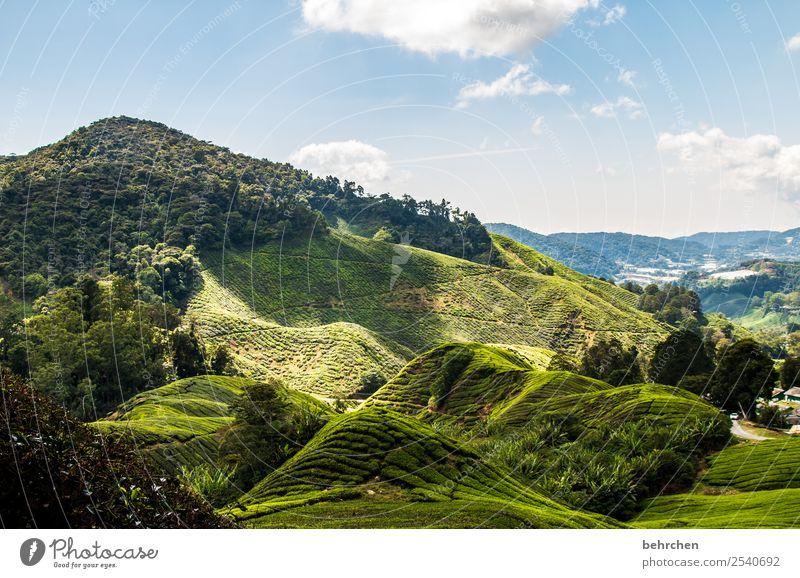 licht und schatten Himmel Natur Ferien & Urlaub & Reisen schön grün Landschaft Baum Wolken Wald Ferne Berge u. Gebirge Wiese Gras Tourismus Freiheit