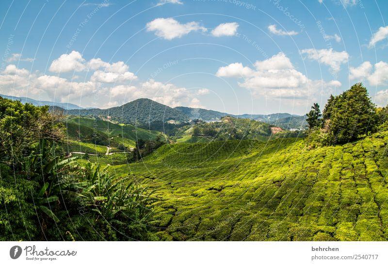 grüner teppich Ferien & Urlaub & Reisen Tourismus Ausflug Abenteuer Ferne Freiheit Natur Landschaft Himmel Wolken Pflanze Baum Sträucher Nutzpflanze Teepflanze
