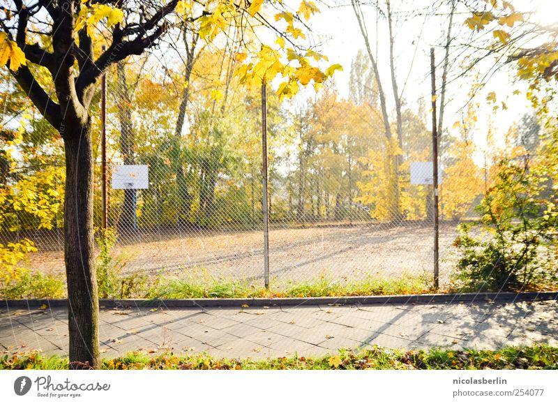 Golden Memories Pflanze schön Farbe Baum Erholung Blatt Freude Umwelt gelb Herbst natürlich Spielen Glück Freiheit Park Freizeit & Hobby