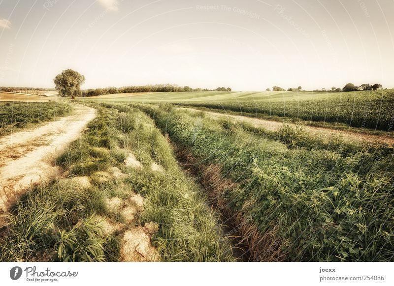 Trennung Himmel Natur grün schön Baum Sommer Wolken ruhig Landschaft Gras Wege & Pfade braun Feld Erde groß Idylle