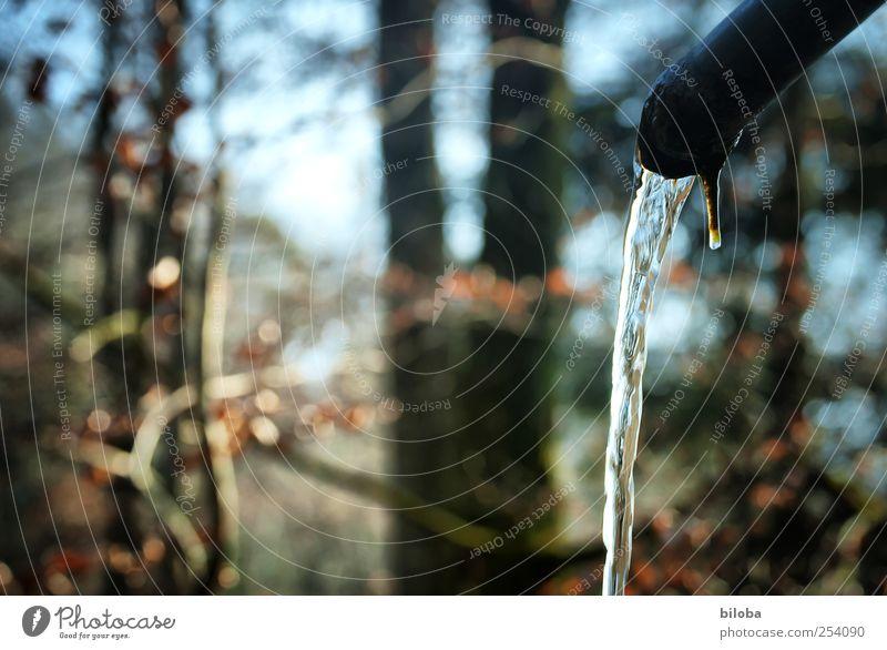 Im Flow sein Natur Wasser blau weiß Pflanze Sommer Winter Wald Herbst Landschaft Bewegung braun Trinkwasser Tropfen Sauberkeit durchsichtig