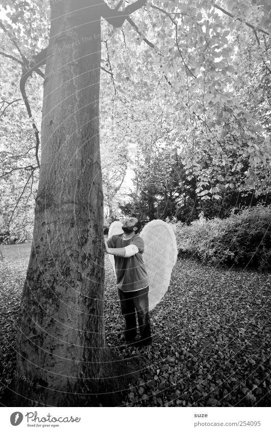 Engel Mensch maskulin Mann Erwachsene 1 30-45 Jahre Umwelt Natur Pflanze Erde Herbst Baum Blatt Park Flügel stehen außergewöhnlich Macht Hoffnung