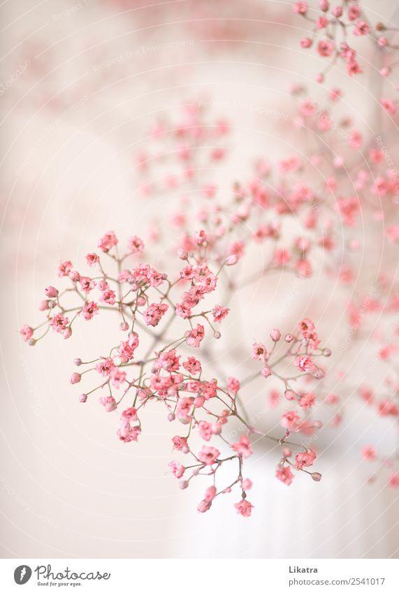 Ein Traum in rosa Lifestyle Stil Sommer Häusliches Leben Wohnung Innenarchitektur Dekoration & Verzierung Vase Natur Pflanze Blume Blüte Schleierkraut Blühend