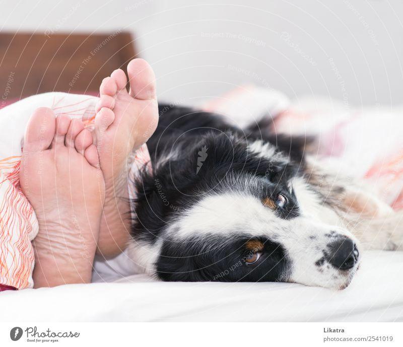 Hund im Bett Mensch Mann weiß Erholung Tier ruhig schwarz Erwachsene Wärme natürlich Glück Fuß Zusammensein braun rosa