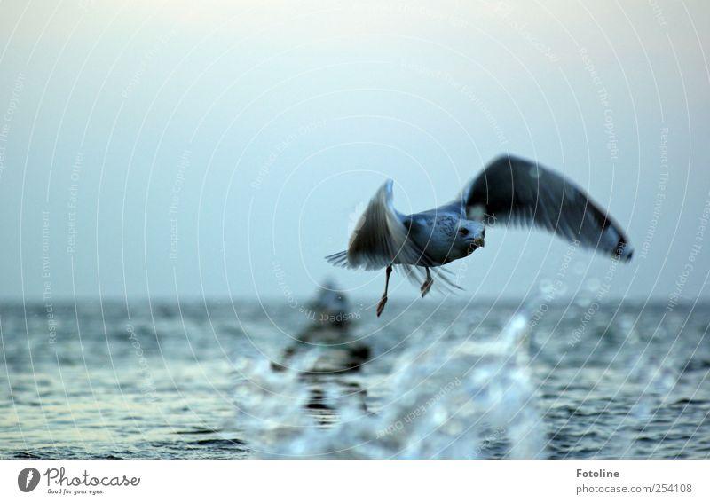 Schnell weg! Umwelt Natur Tier Wasser Küste Ostsee Meer Wildtier Vogel Flügel dunkel nah nass natürlich fliegen Farbfoto Gedeckte Farben Außenaufnahme