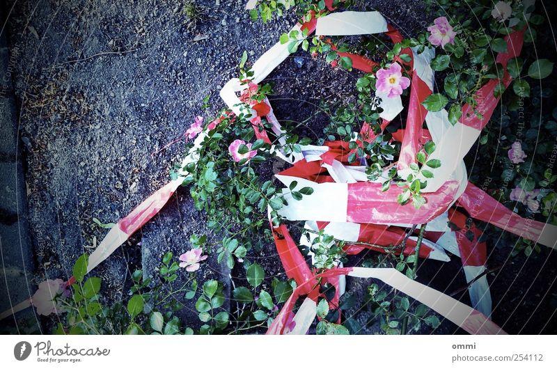 Hand in Hand durch's Absperrband weiß grün Pflanze rot Blume Blatt Farbe Blüte Erde dreckig rosa wild gefährlich authentisch einfach Verfall