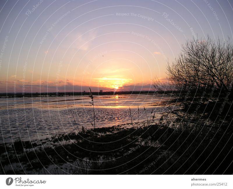 sonnenuntergang Natur Wolken See Landschaft Sträucher authentisch natürlich Damme