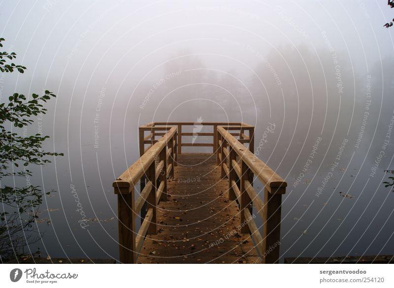 Foggy Lake Rethorn Ausflug Umwelt Natur Landschaft Wasser Horizont Herbst Wetter Nebel Baum Seeufer Flussufer Steg Holz bedrohlich dunkel gruselig kalt trist