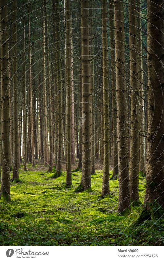 Viele Bäume Natur grün Baum Pflanze ruhig Wald Umwelt Stimmung braun Erde Schutz Zeichen Moos