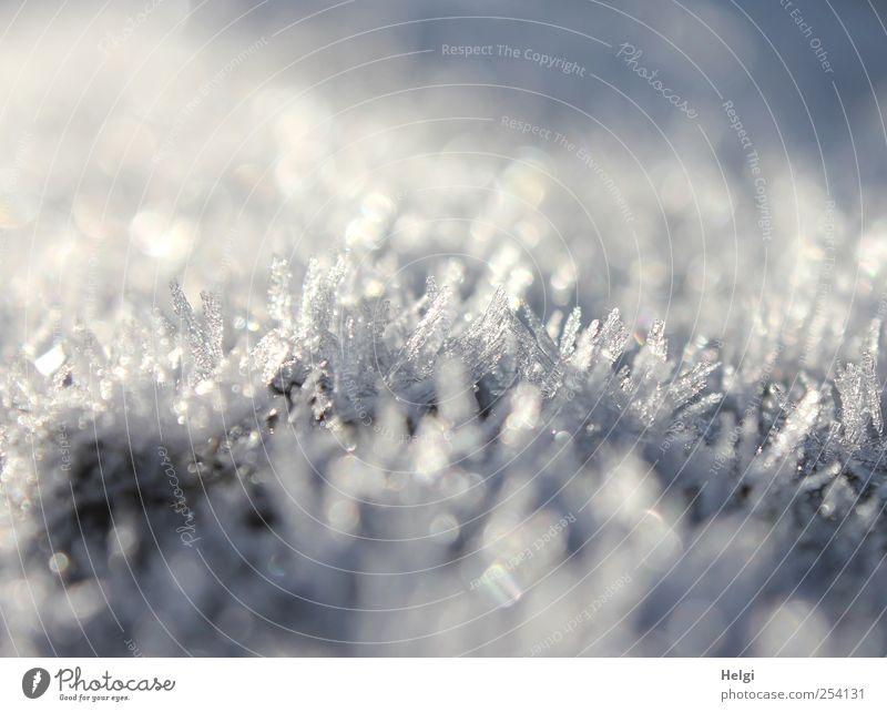 bizarre Schönheit... Umwelt Natur Herbst Schönes Wetter Eis Frost glänzend ästhetisch außergewöhnlich eckig fantastisch schön klein natürlich blau weiß