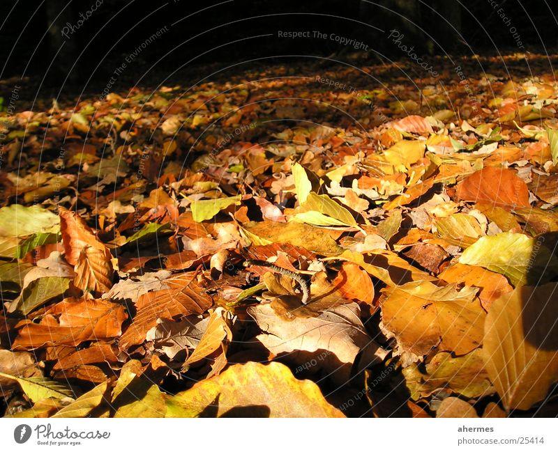 herbst Natur Blatt Herbst