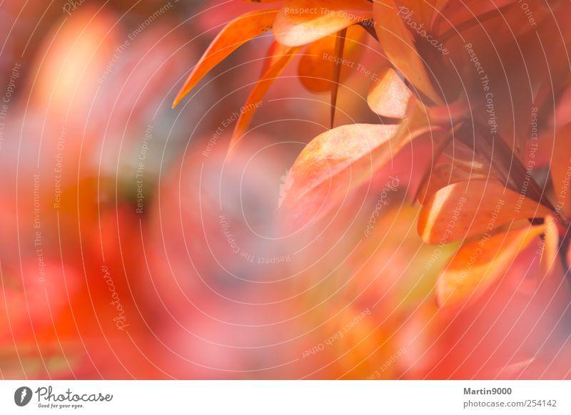 Fest der Farben Herbst Fröhlichkeit verrückt mehrfarbig rot Stimmung Lebensfreude Warmherzigkeit Romantik Leichtigkeit Natur Farbfoto Außenaufnahme