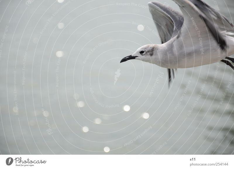 Abflug blau weiß schön Tier schwarz ruhig Gefühle Bewegung Vogel glänzend fliegen frei ästhetisch außergewöhnlich Flügel Spitze
