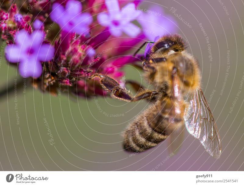 Festhalten Natur Sommer Pflanze Blume Tier Umwelt Frühling Blüte Wiese Garten Arbeit & Erwerbstätigkeit Ausflug Park Wildtier Schönes Wetter Blühend
