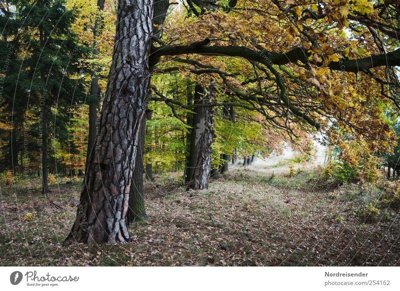 Herbsttunnel Natur Pflanze ruhig Wald Erholung Herbst Landschaft Wege & Pfade Stimmung wandern Wandel & Veränderung Gelassenheit Fußweg Baumstamm Meditation Herbstlaub