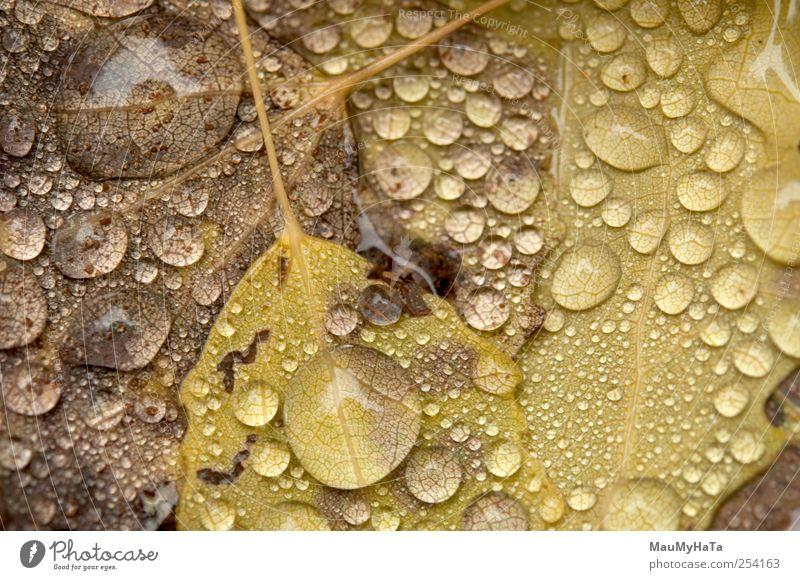 Wassertropfen Natur Pflanze Urelemente Herbst Klima schlechtes Wetter Regen Baum Blatt Wildpflanze Garten Park Kontakt Kunst Macht Kraft Stil