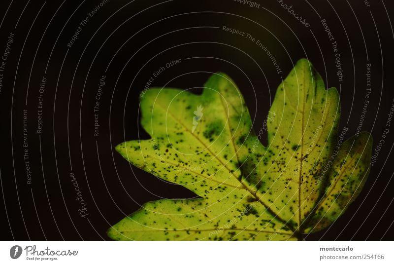 Black & Green Natur grün Pflanze Blatt schwarz Umwelt dunkel Herbst Schönes Wetter einfach trocken Grünpflanze Wildpflanze