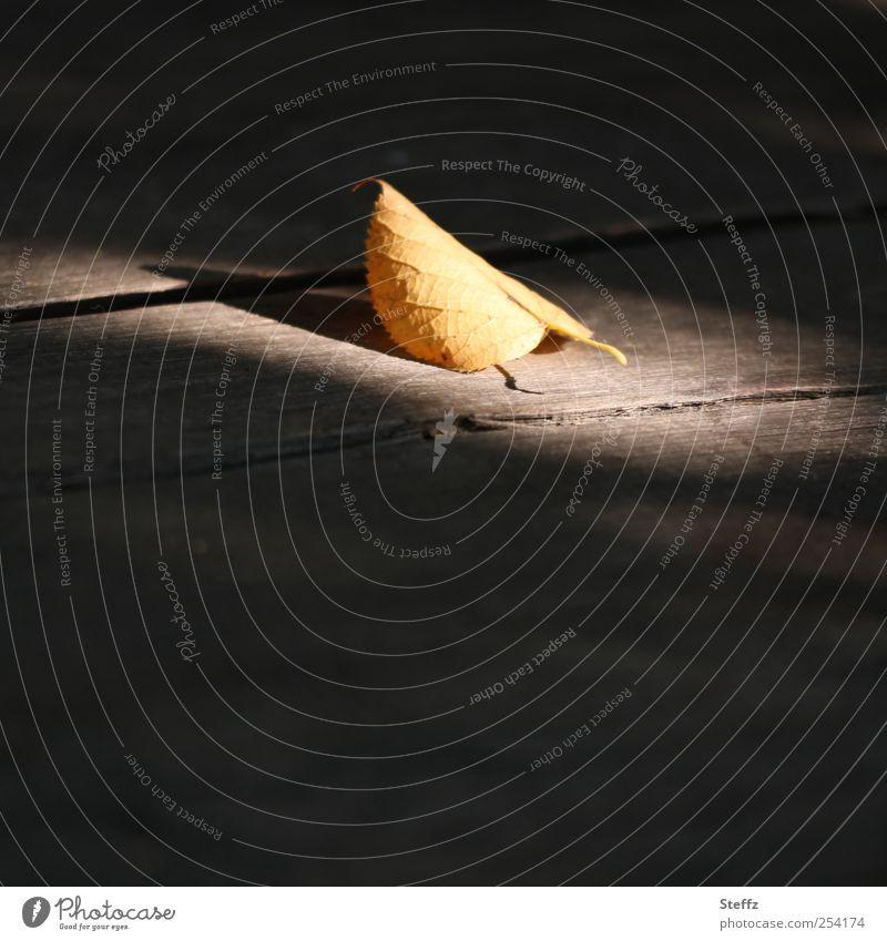 moment of grace Herbstblatt Augenblick Achtsamkeit achtsam stiller Moment Lichteinfall Stille einzigartig Holztisch Lichtschein Ruhe ruhig anders Lichtstimmung