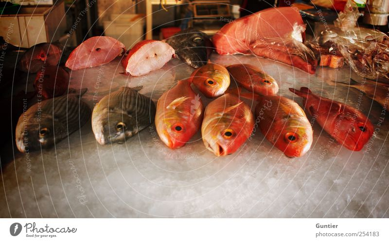das Sterben der Meere Wildtier Totes Tier Fisch kalt braun rot schwarz weiß verkaufen Fischmarkt Asien Tod Lebensmittel Eis aufgeschnitten Vielfältig Auswahl