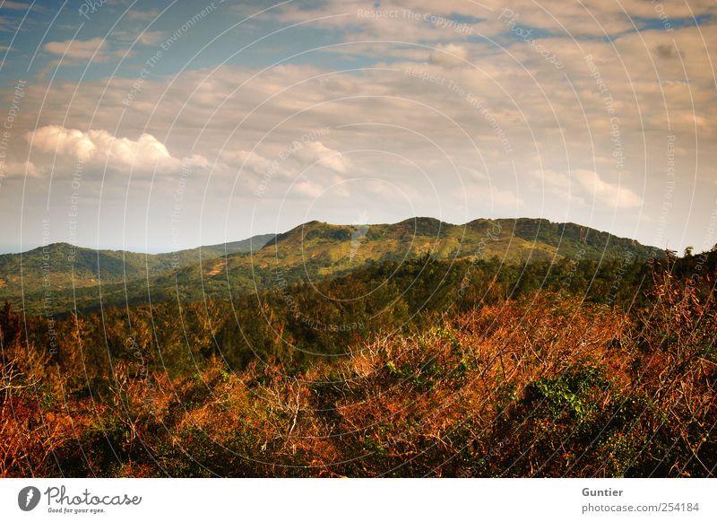 Touch My Heart Umwelt Natur Landschaft Pflanze Himmel Wolken Sommer Schönes Wetter Baum Gras Sträucher Wald Urwald ästhetisch exotisch blau grün weiß Gefühle