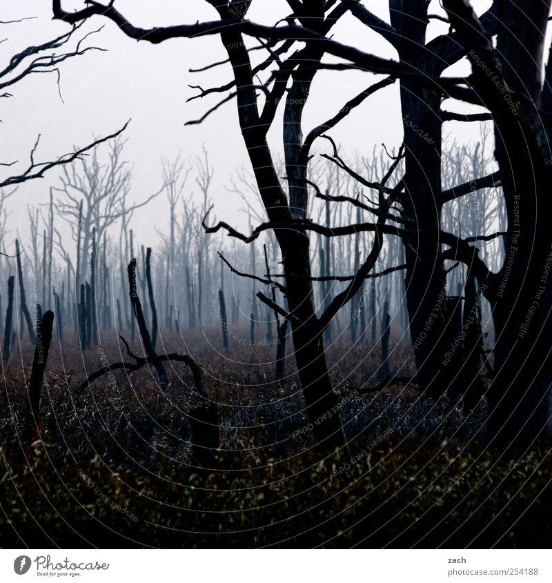 Herbst Natur Landschaft schlechtes Wetter Nebel Pflanze Baum Baumstamm Holz dunkel gruselig blau braun Ende Endzeitstimmung Verfall Vergänglichkeit laublos