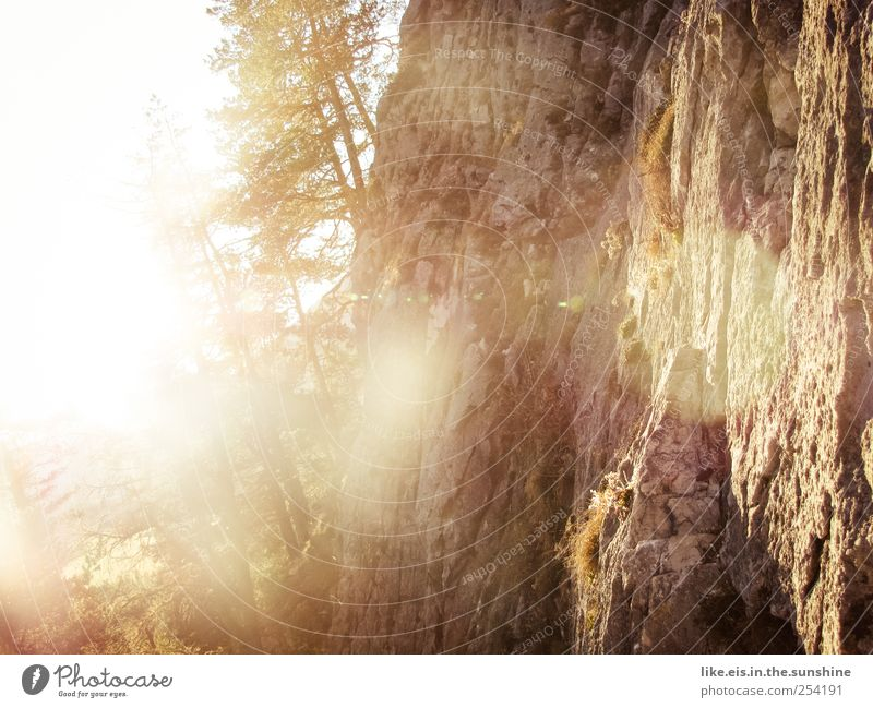 goldener herbst ruhig Natur Landschaft Herbst Schönes Wetter Baum Gras Sträucher Felsen Alpen Berge u. Gebirge glänzend leuchten natürlich Felswand wandern