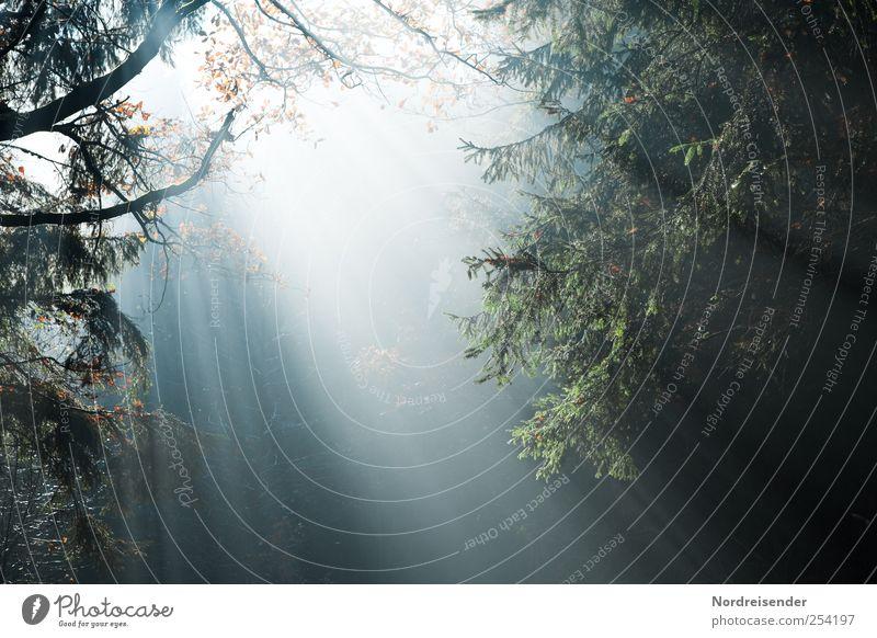 Licht ins Dunkel Natur Pflanze Urelemente Sonnenlicht Herbst Klima Wetter Nebel Baum Wald Linie Optimismus Religion & Glaube Stimmung Surrealismus Herbstwald