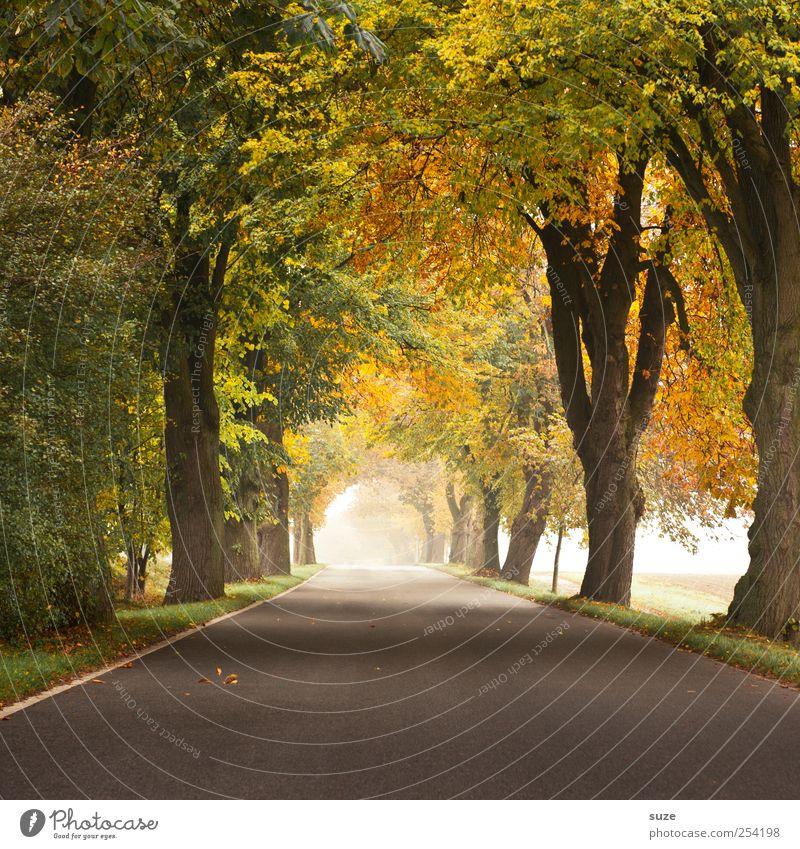 Herbstlicht Natur schön grün Pflanze Baum Landschaft Umwelt Straße Wege & Pfade grau Wetter Nebel Verkehr Klima authentisch