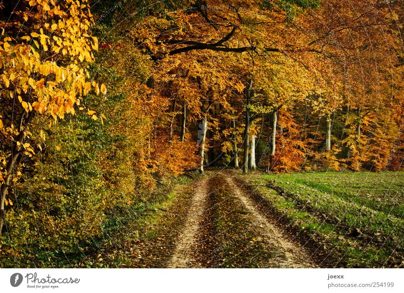 Loslassen Natur grün Baum schwarz Wald gelb Herbst Landschaft Wege & Pfade braun Feld Wandel & Veränderung Vergänglichkeit Fußweg Schönes Wetter herbstlich