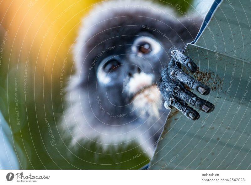 langfinger Ferien & Urlaub & Reisen Tier Ferne Tourismus Freiheit außergewöhnlich Ausflug Wildtier Abenteuer fantastisch Finger beobachten Asien Fell exotisch