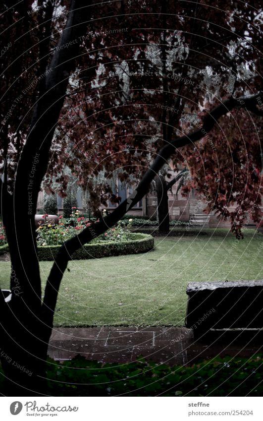 cats & dogs Herbst schlechtes Wetter Regen Baum Wiese nass Regenwasser Farbfoto Außenaufnahme Zentralperspektive feucht Menschenleer Schatten Wege & Pfade Park