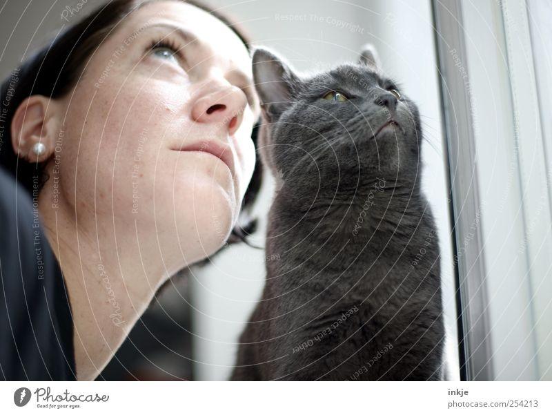 you and I Freizeit & Hobby Häusliches Leben Wohnung Frau Erwachsene Gesicht 1 Mensch Haustier Katze british kurzhaar Tier beobachten Denken Blick Zusammensein
