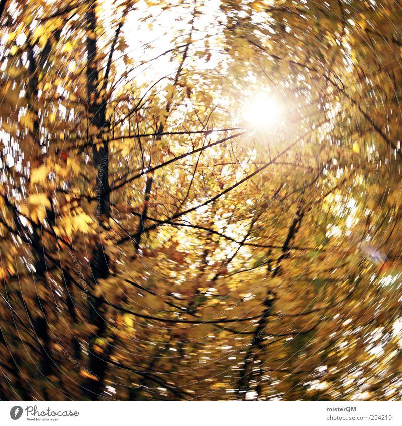 Herbstwind. Natur Sonne gelb Kunst Zufriedenheit wandern ästhetisch Herbstlaub diffus herbstlich Verwirbelung Schwindelgefühl Herbstbeginn Herbstfärbung