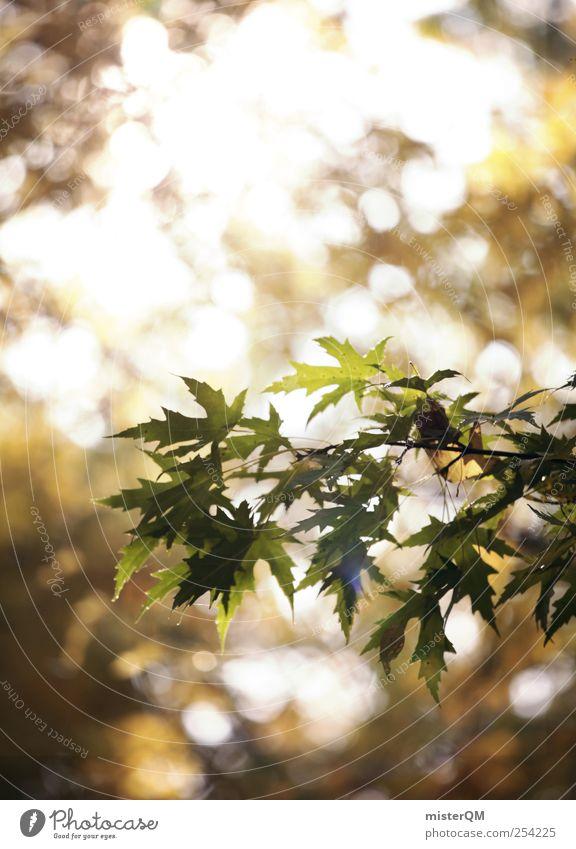 Herbstlicht. Natur grün Baum Pflanze Wald gelb Herbst Umwelt Zufriedenheit natürlich ästhetisch Ast Idylle Zweig Herbstlaub Lichtspiel