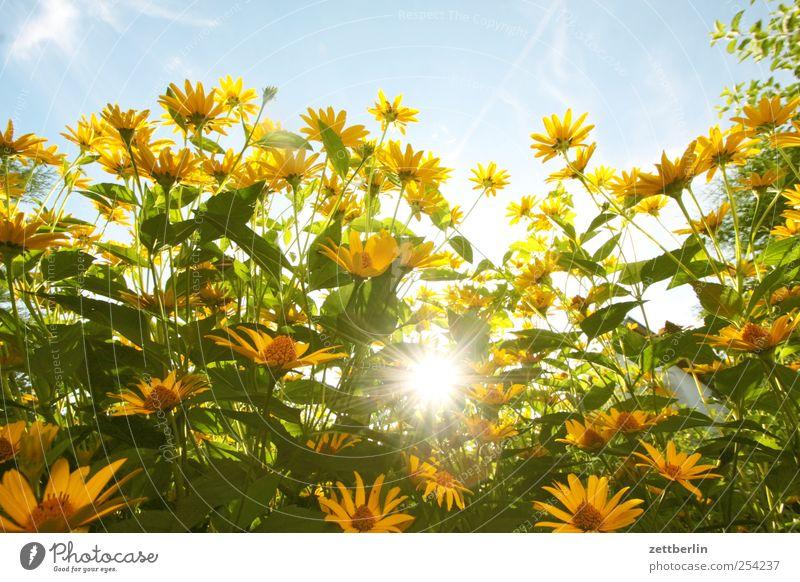 Herbstsonne Freizeit & Hobby Umwelt Natur Landschaft Pflanze Himmel Klima Wetter Schönes Wetter Blume Blatt Blüte Grünpflanze Garten Park gut Kleingartenkolonie