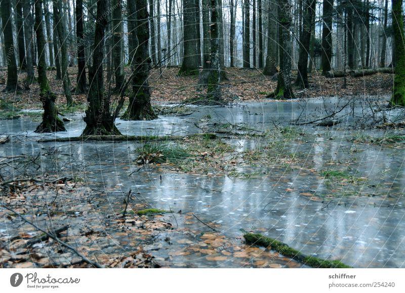 Vorgeschmack Natur Landschaft Pflanze Erde Winter schlechtes Wetter Eis Frost Baum Wald dunkel unheimlich Teich gefroren Traurigkeit Vergänglichkeit Baumstamm