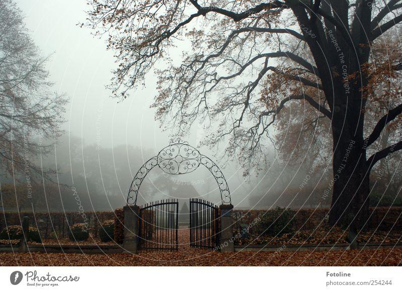 Eingang... Umwelt Natur Landschaft Pflanze Herbst Nebel Baum Garten Park dunkel natürlich Tor Eisentor Ast Hecke offen Farbfoto Gedeckte Farben Außenaufnahme