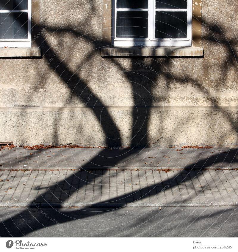 BaumHaus (Reprise) | ChamanSülz Fenster Wand Umwelt Mauer Fassade Ast Bürgersteig Stress chaotisch Straßenbelag durcheinander Überraschung Wohnhaus