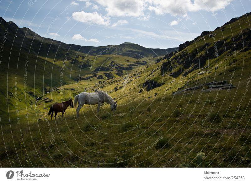 Natur grün schön Ferien & Urlaub & Reisen Tier Glück Stimmung Zufriedenheit elegant Tierpaar Abenteuer frisch ästhetisch authentisch Hoffnung Macht